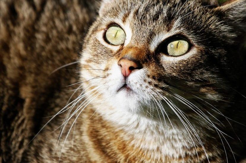 La diabetes felina es una enfermedad grave