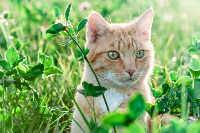 Los gatos viven en todo el mundo