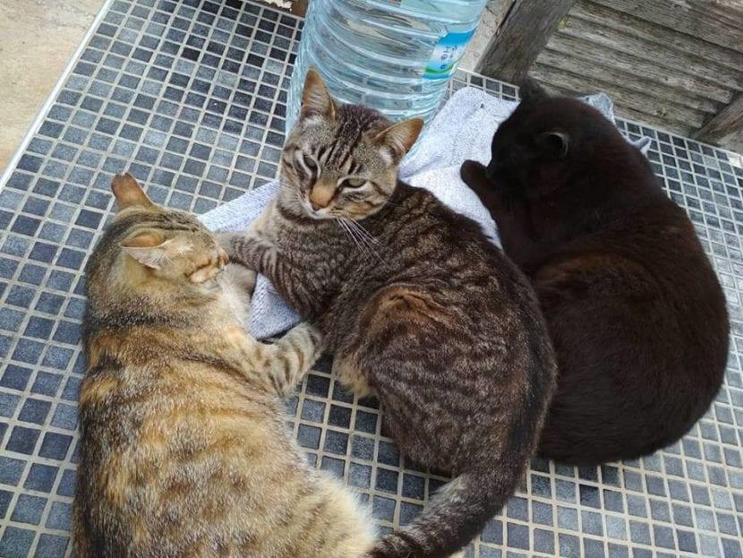Los gatos del jardín