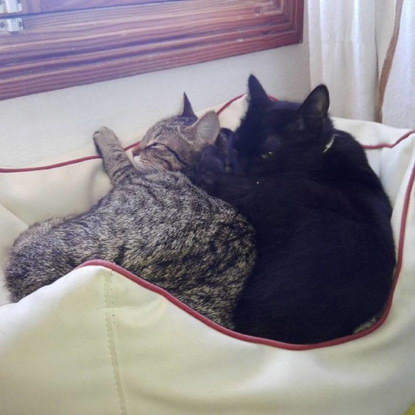 Sasha y Benji, durmiendo juntos