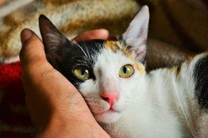 Los gatos no pueden contraer el coronavirus
