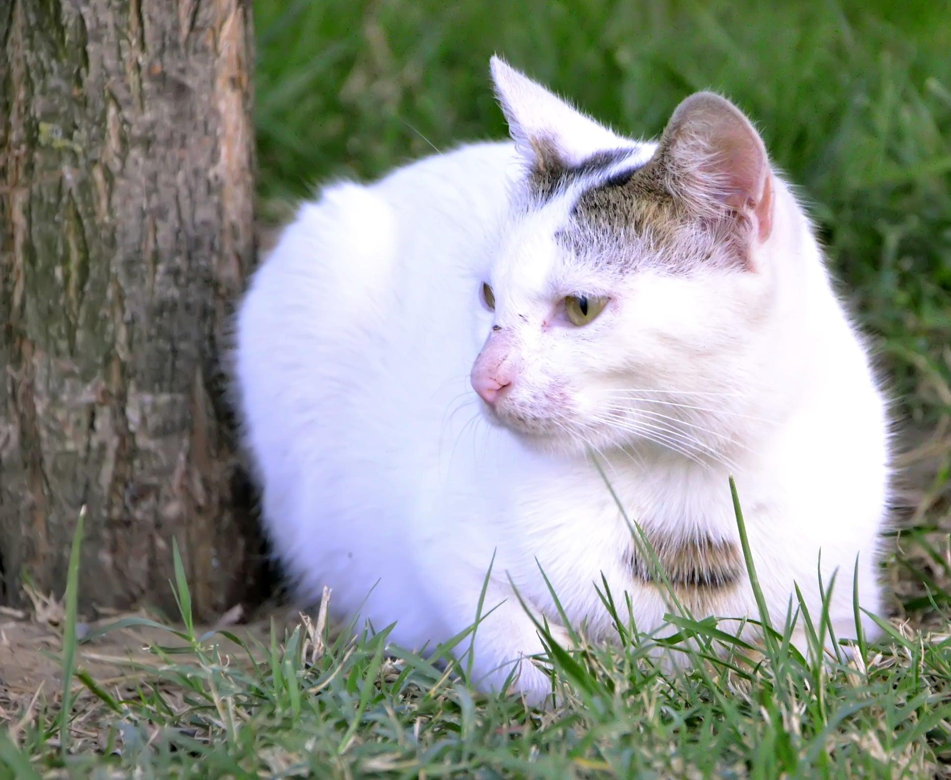 Las gatas embarazadas deben comer pienso rico en proteínas