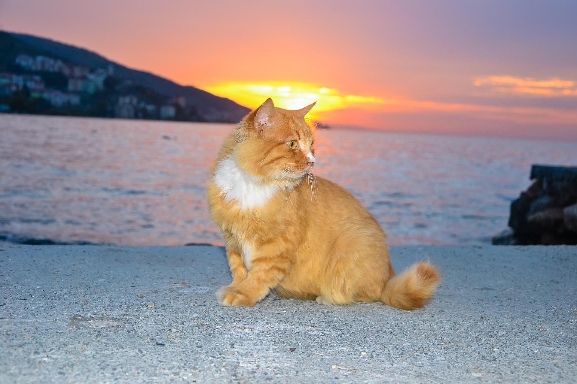 Gata esperando gatitos