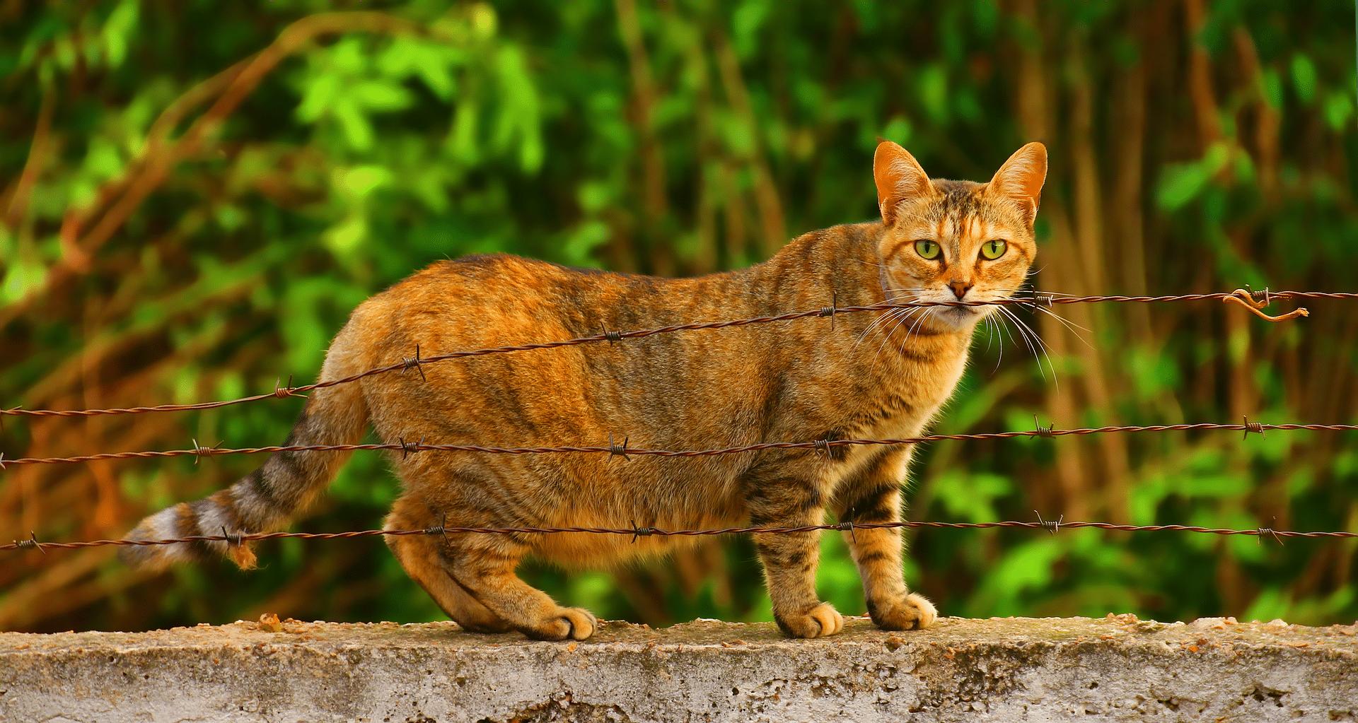 Las gatas embarazadas deben comer pienso adecuado para ellas