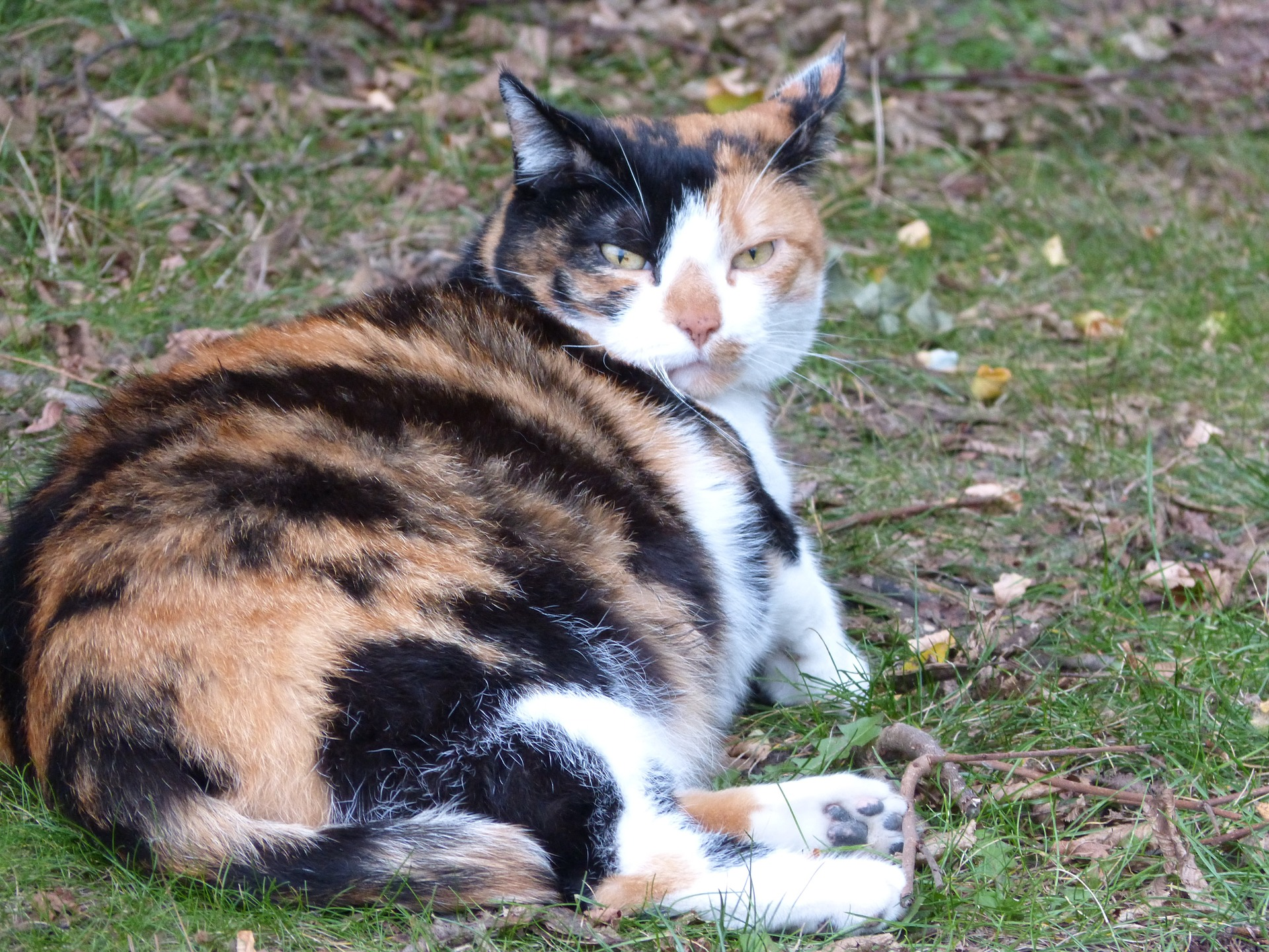 Las gatas embarazadas necesitan cuidados especiales