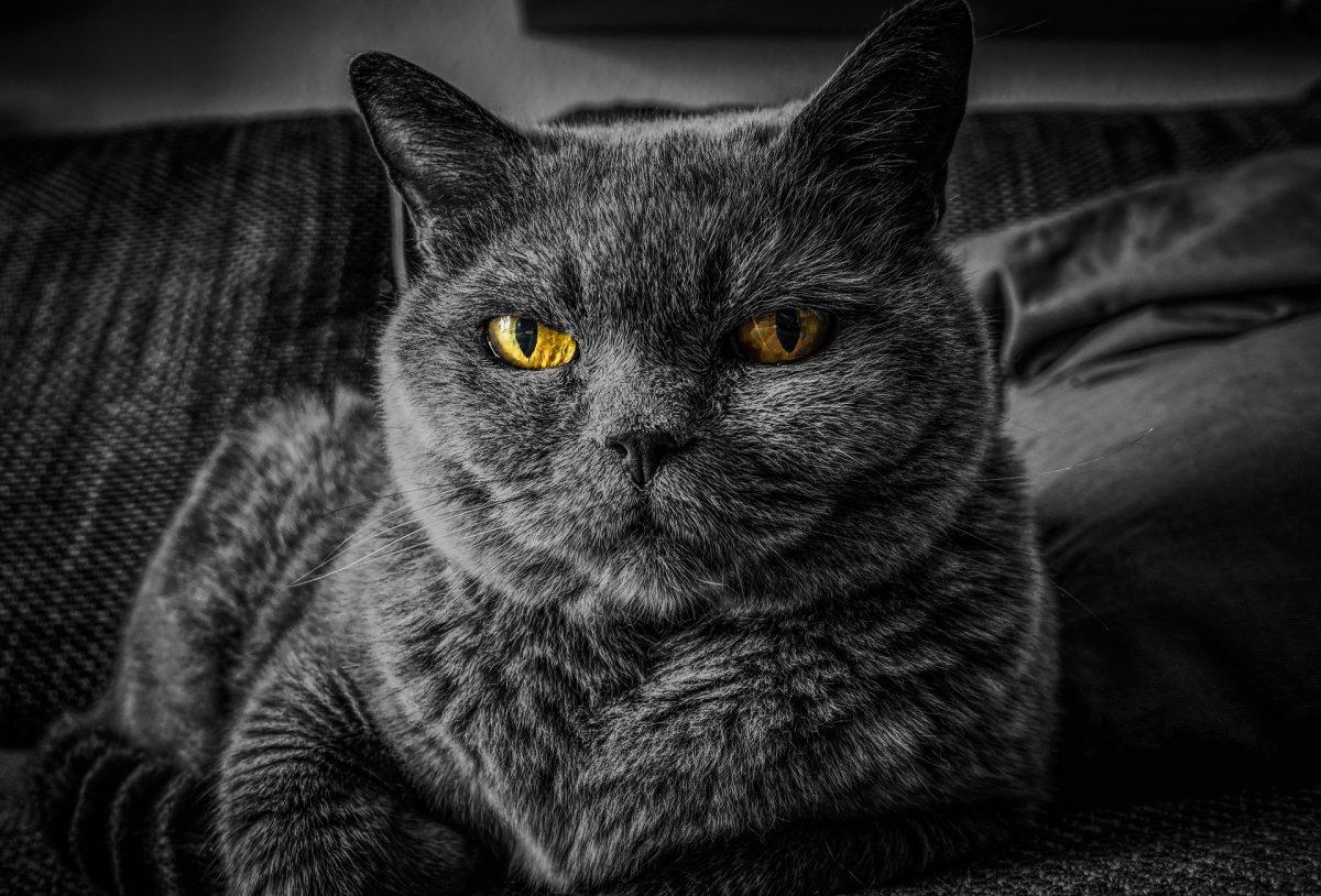Gato en el sofá preparado para comer pienso